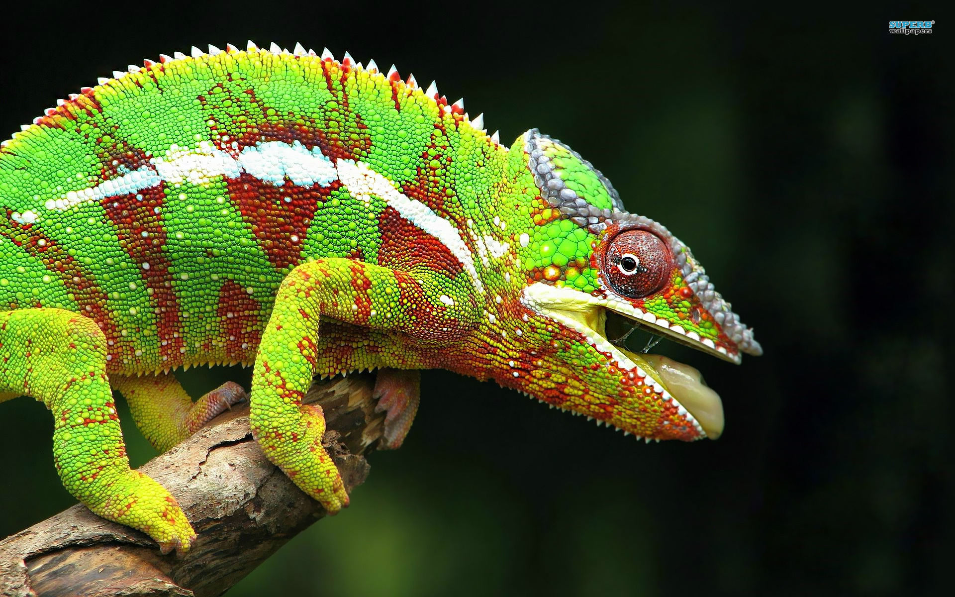 What Chameleons Change Color
